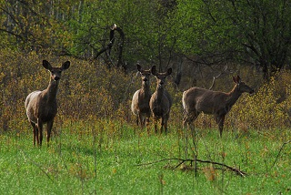 group of deer at forest edge