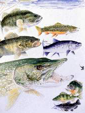 drawing of 5 freshwater fish