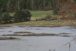 Photo of a water body in Franklinton Vlaie WMA.
