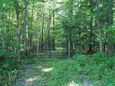 Forested trail at Hampton Brook Woods WMA in summer