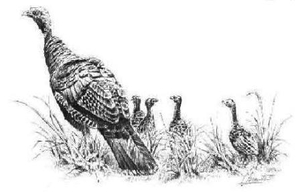Turkey hen with poults