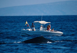 photo of a humpback whale and a boat
