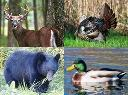 A montage showing a deer, a turkey, a bear and a duck to represent the hunting seasons of those animals