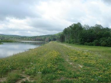Keeney Swamp Wildlife Management Area Nys Dept Of