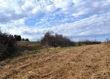 Landowner Incentive Program Hedgerow Removal on Grassland Project Site
