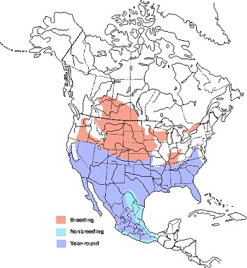 map of the yearround range of the loggerhead shrike