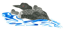 color drawing of loon with chicks
