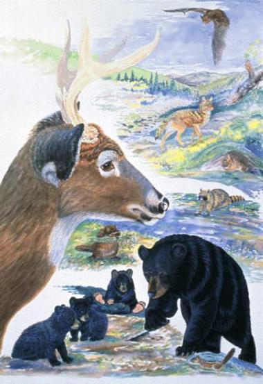 Mammals - NYS Dept. of...