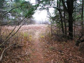 Unmarked path through the woods at Margaret Brooke WMA