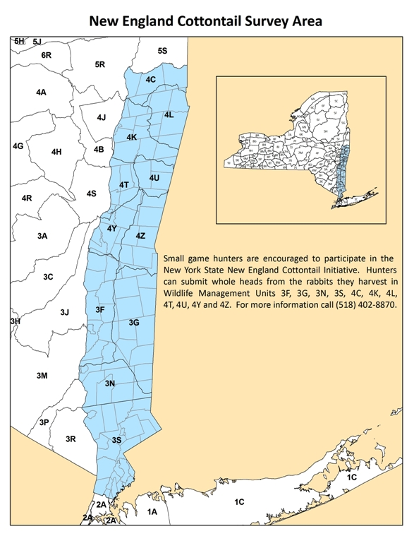 New England cottontail survey map