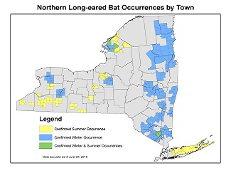 Image showing Northern Long-eared Bat Occurrences by Town