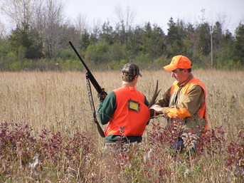 Two pheasant hunters in the field bagging their harvest