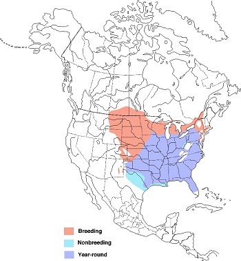 The breeding range of the red-headed woodpecker spans across the northern midwest to northeastern coast while their year-round range extended further south in the same regions.