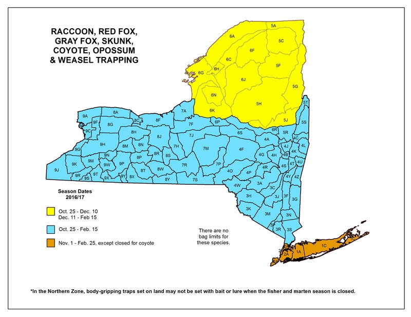 Map of New York State listing hunting seasons and areas for raccoon, foc, skunk, coyote, opossum and weasel trapping.