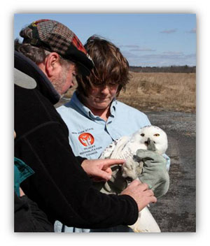 Rehabilitators with snowy owl