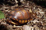 Picture of a turtle