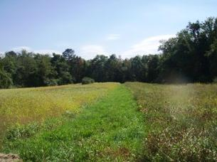 A field in Vinegar Hill Wildlife Management Area