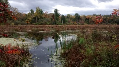 The wetlands in Vosburgh Swamp WMA