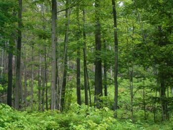 A forest in Wolf Hollow Wildlife Management Area