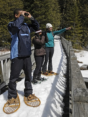 Image of three people snowshoeing and observing the wildlife. One is using binoculors to view from a safe distance.