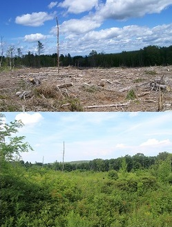 Photo just after a clearcut and then 5 years later