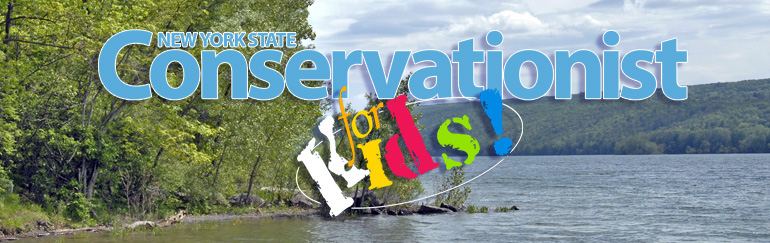 Conservationist for Kids Magazine banner